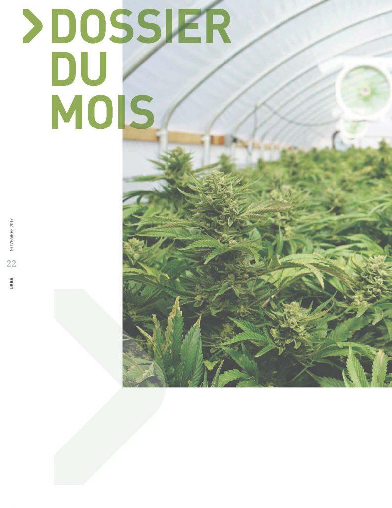 Dossier du mois – Légalisation du cannabis : quels impacts pour les municipalités ?