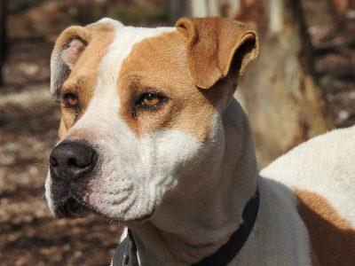Projet de loi 128, Loi visant à favoriser la protection des personnes par la mise en place d'un encadrement concernant les chiens