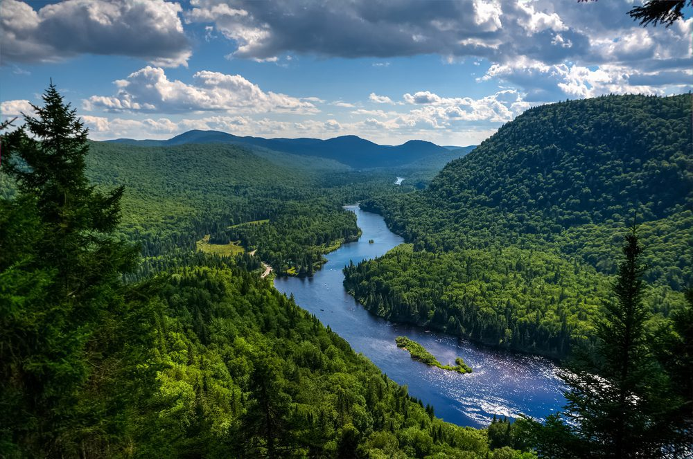 Relance de l'économie – <br/>La forêt fait partie de la solution, selon l'UMQ