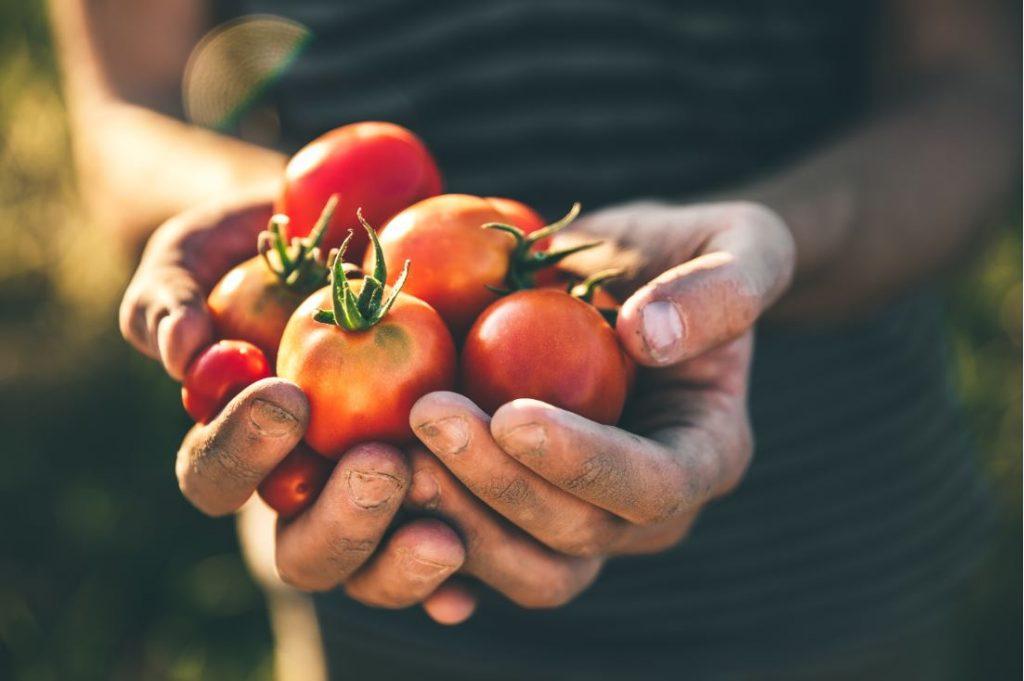 Pistes d'actions municipales pour stimuler l'autonomie alimentaire